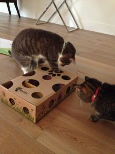 Cats playing with a box
