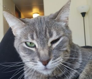 Cat squiting one eye