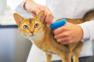 Microchips better than collars