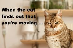 how to move house with a cat