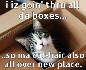 how to move house with a Cat in a box
