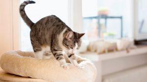 Happy cat knead