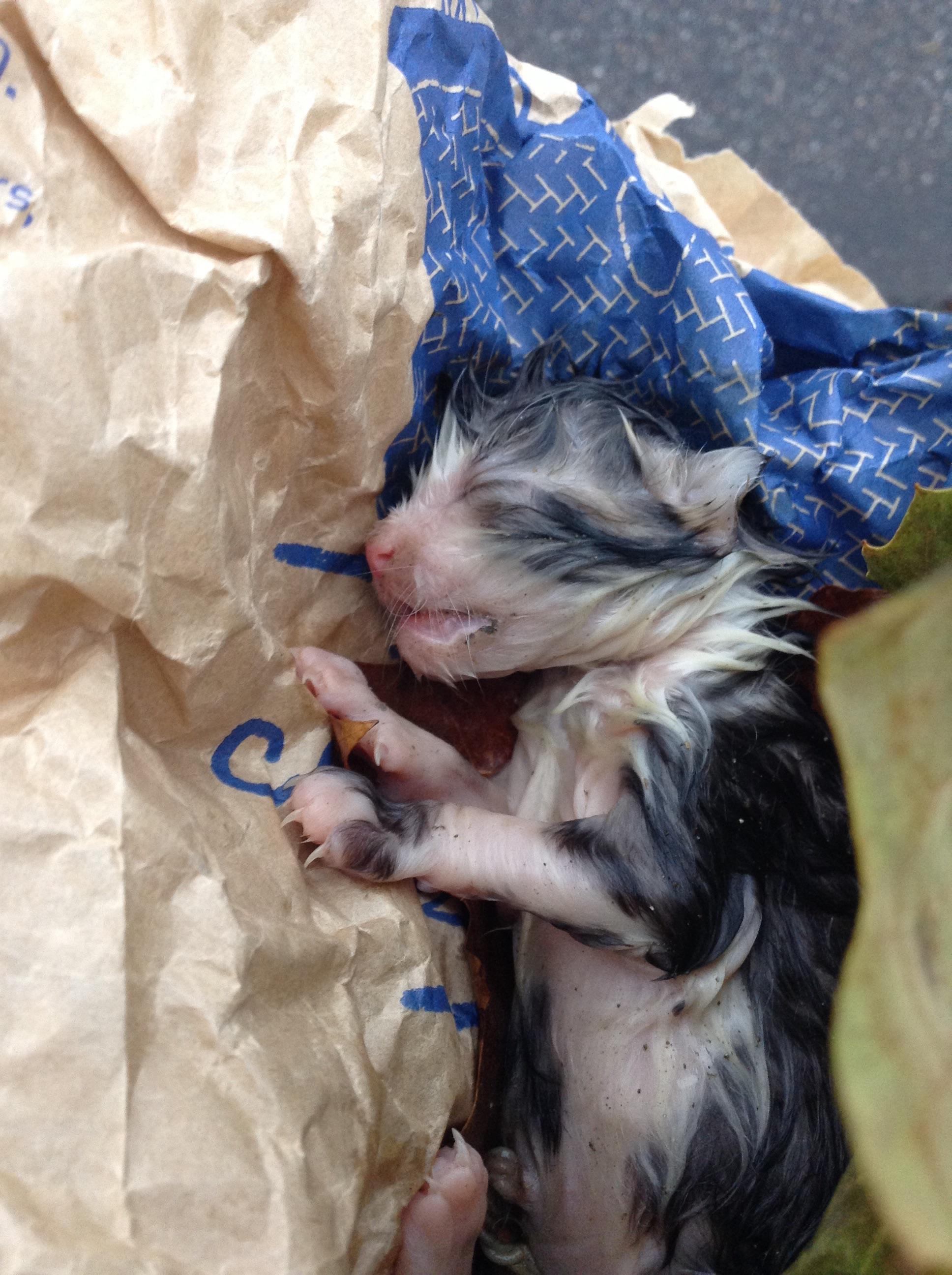 Frau findet dieses kleine Kätzchen 2