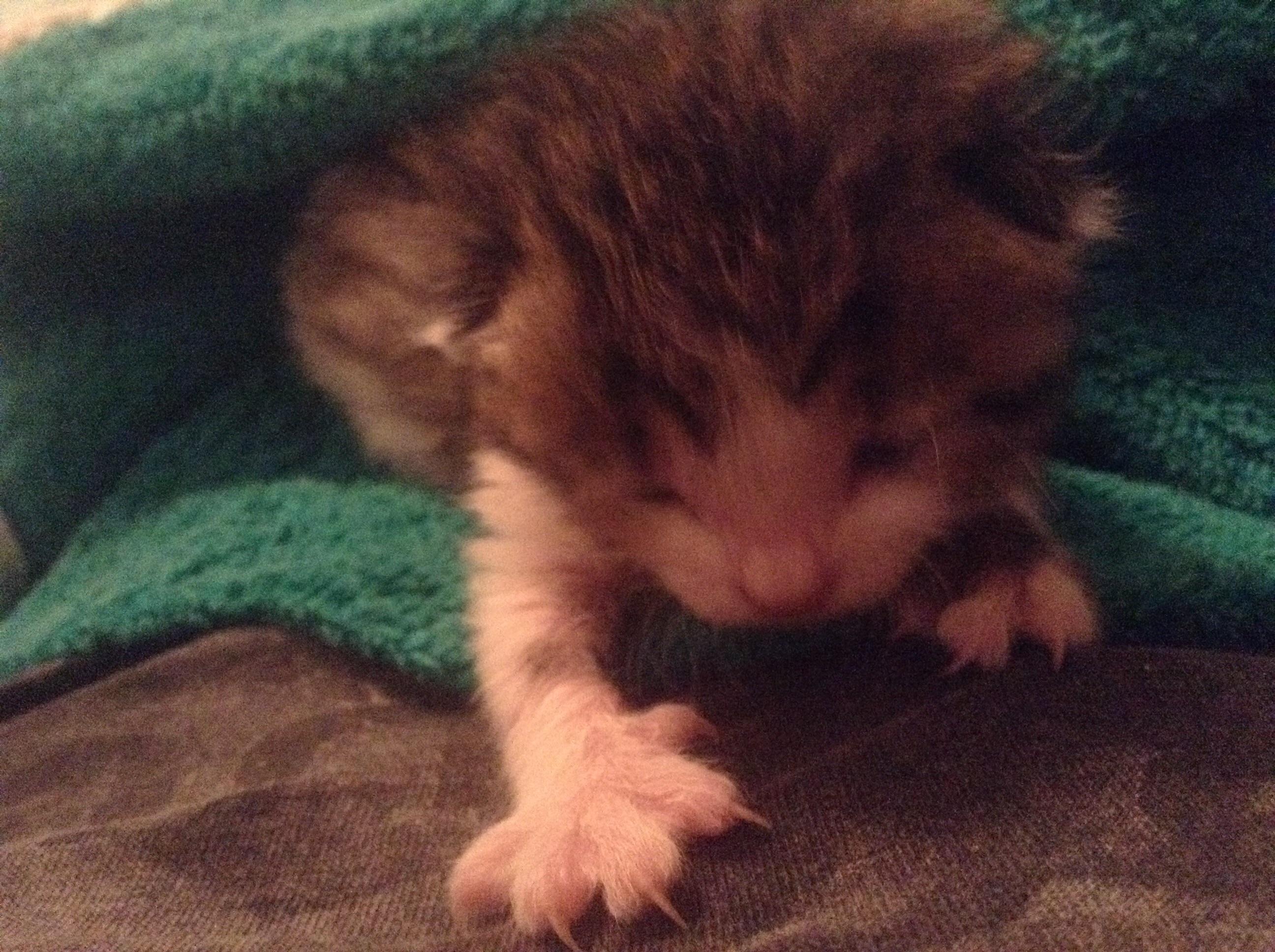 Frau findet dieses kleine Kätzchen 4