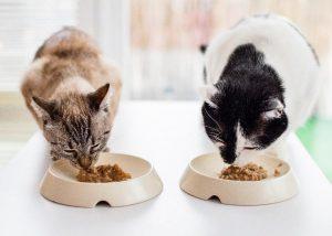 cat_bowls