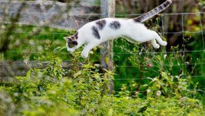 Katzentrinkbrunnen und katze die über eine mauer springt