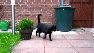 Schwarze Katze, große Tatze
