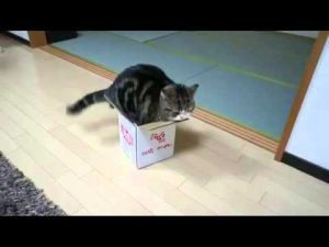 Katze in der Nudelbox, asiatisches Essen
