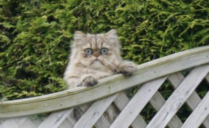 WEnn die Katze zum nachbarhn geht, was tun