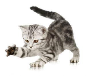 kitten-hat-druchfall