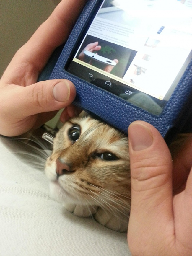 """""""Privatsphäre"""" mit Katzen  5"""