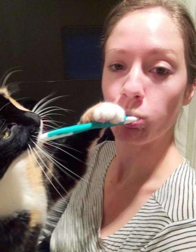 """""""Privatsphäre"""" mit Katzen  3"""
