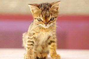 Down- Syndrom bei Katzen 1