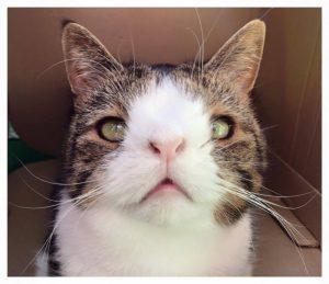 Down- Syndrom bei Katzen 2