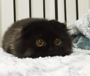 Katze mit den größten Augen