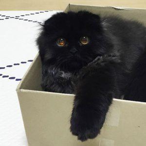 Katze mit den größten Augen 4