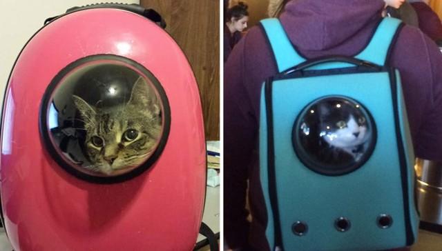 Genialer Reiserucksack für Astronautenkatzen 1