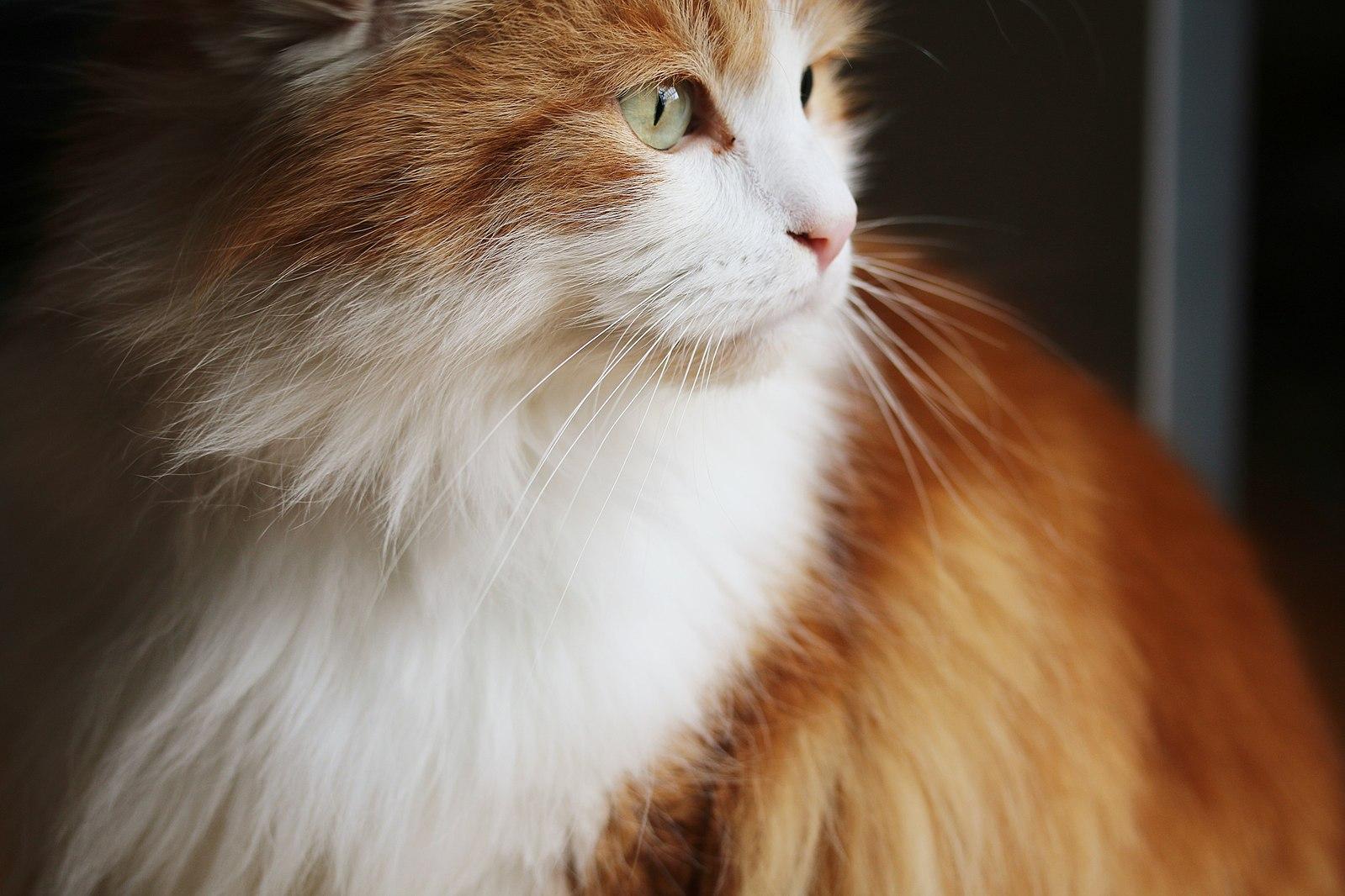 Katzen die nicht haaren