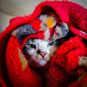 Kalte Ohren bei Katzen