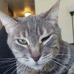 Katze Blinzelt