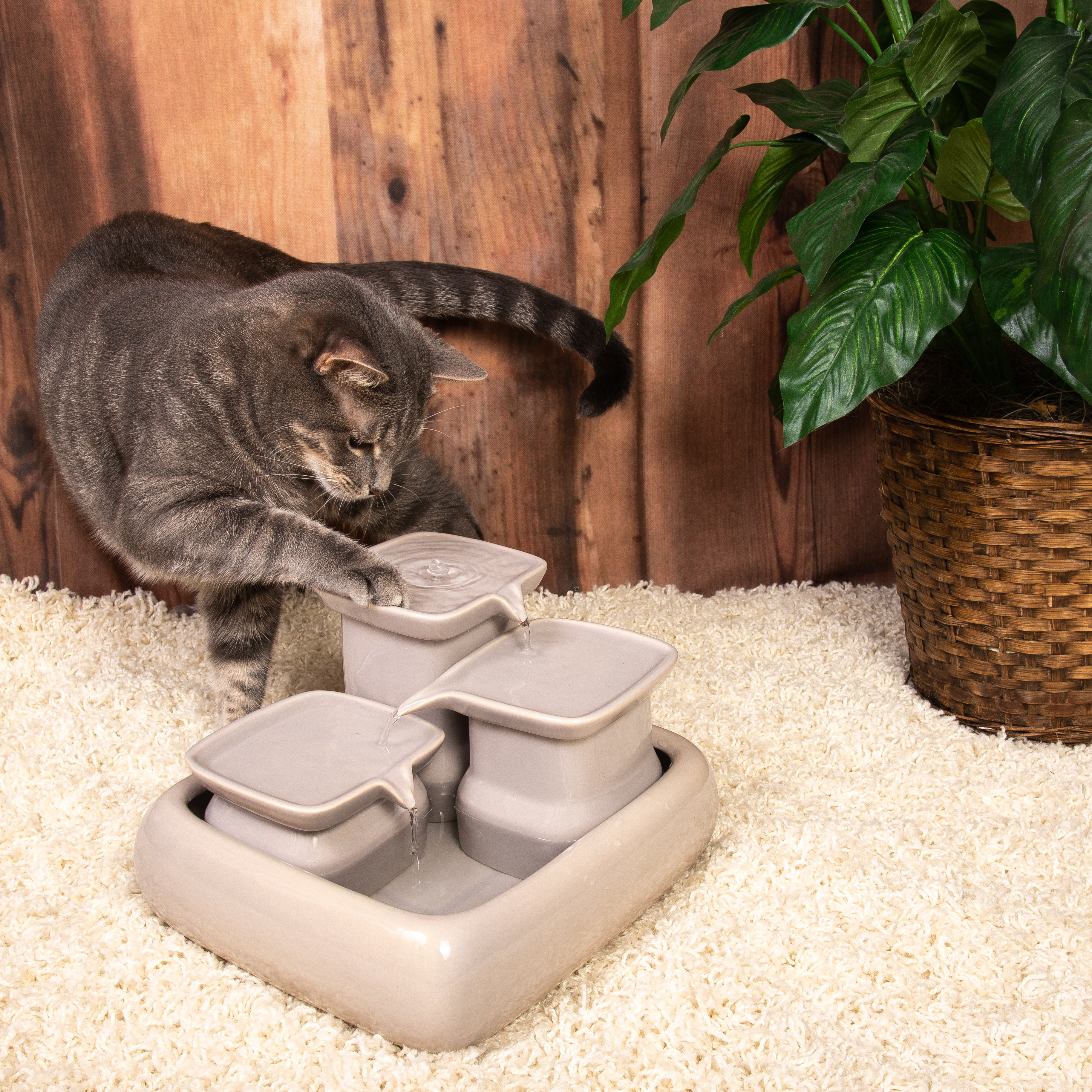 Katzenbrunnen und fließendes wasser