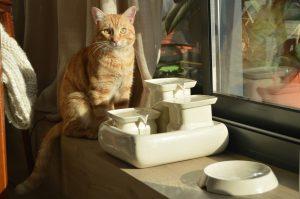 Katzenbrunnen und edler Fressnapf