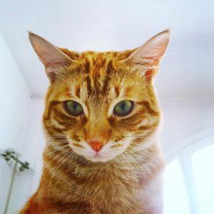 Katzennamen, Männliche Katzen, Weibliche Katzen